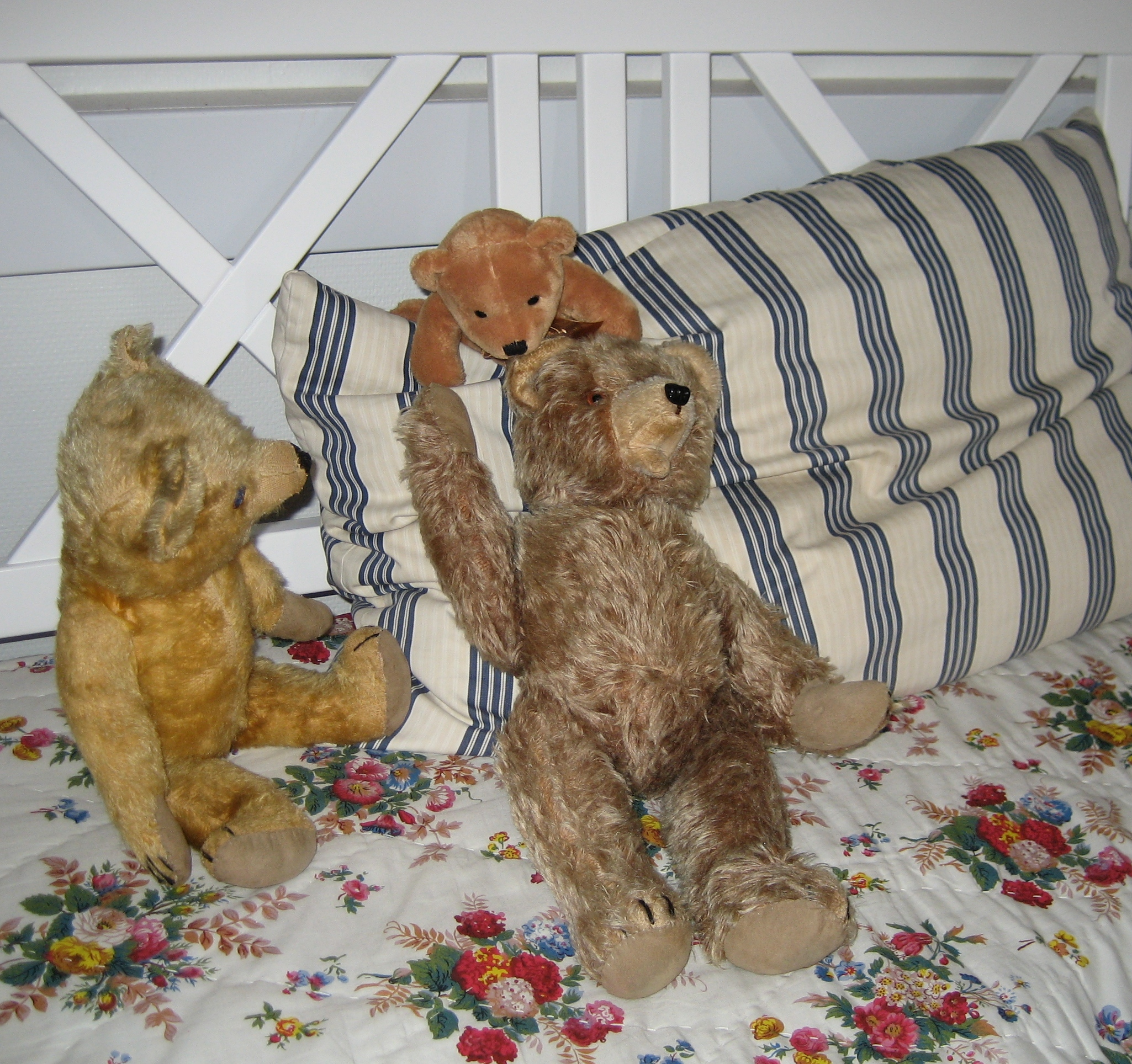 The Teddies make themselves comfy at the Teddy Hotel